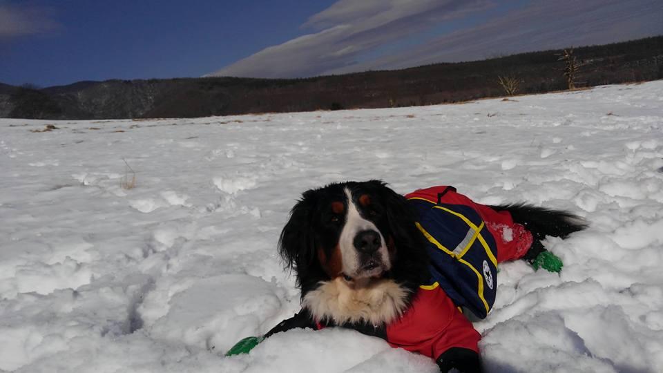 バーニーズとスノーシューハイキング♪