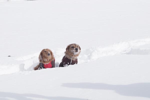 雪が降ればワンコも喜ぶ!愛犬と一緒にスノーシューを楽しみました!