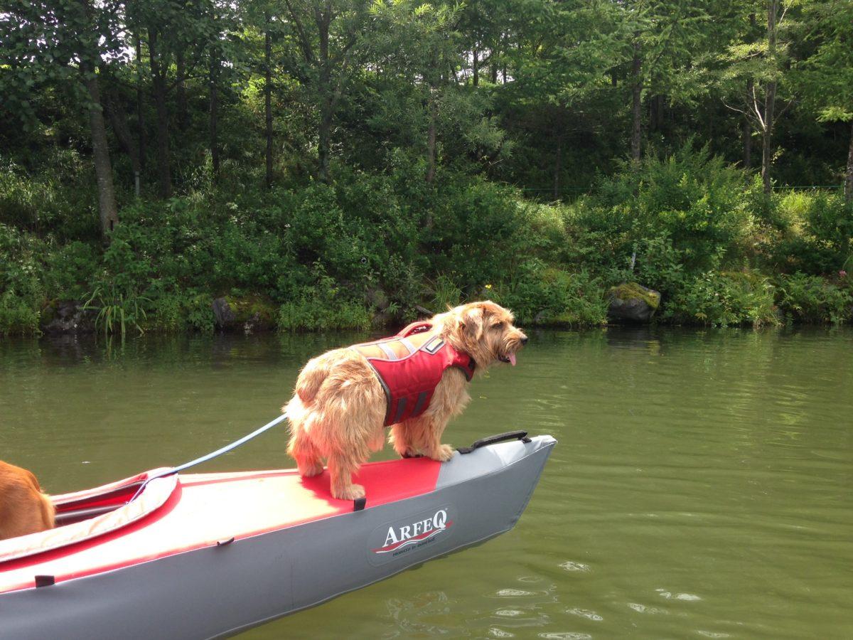 愛犬とカヤック体験