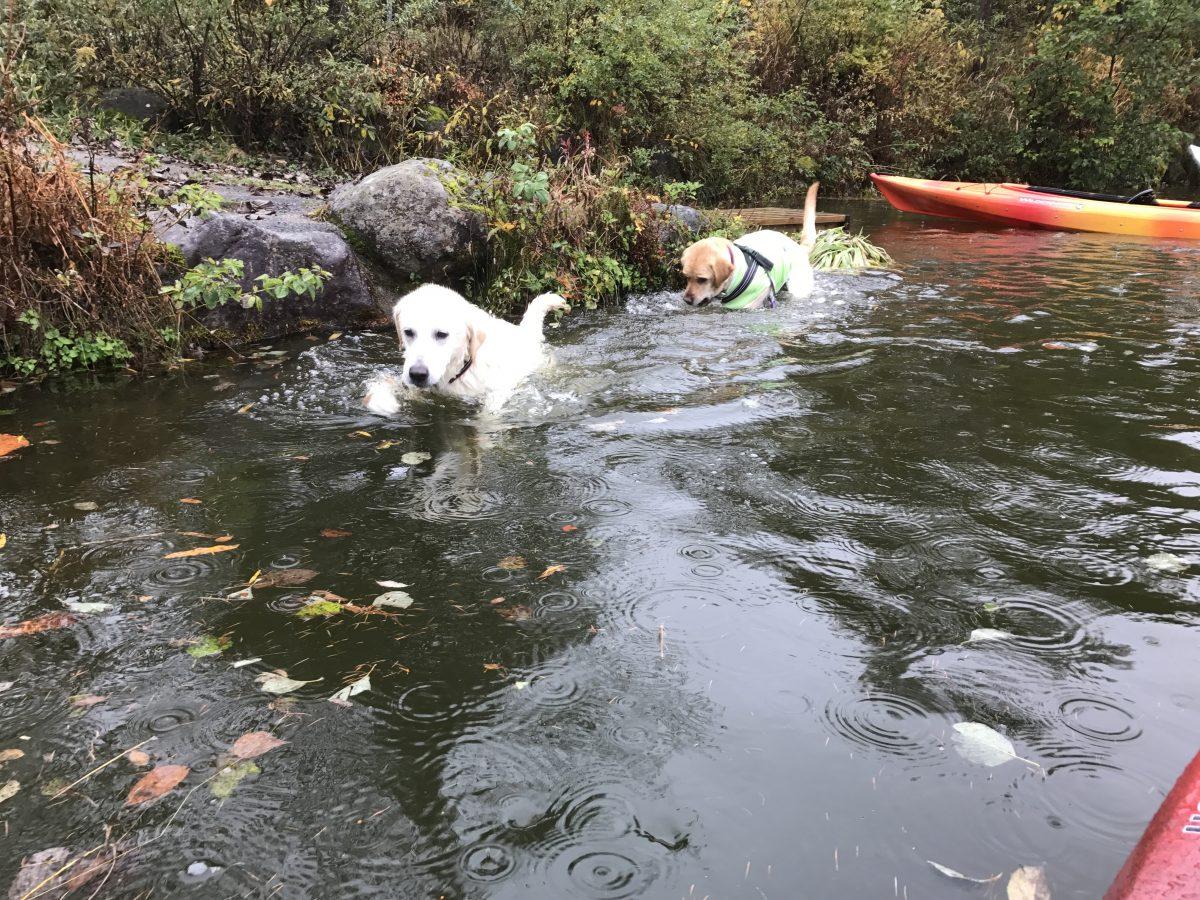 たいへんよく泳ぎました