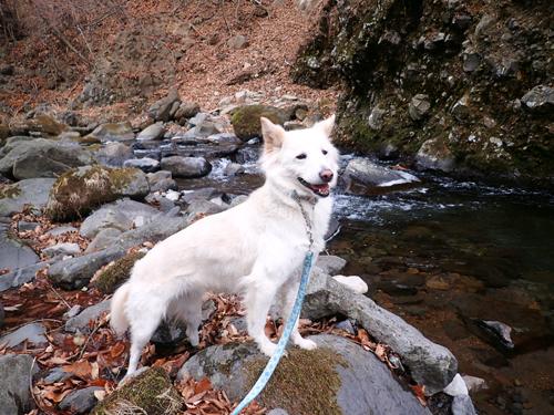 愛犬と、冬の森をゆったりハイキング!