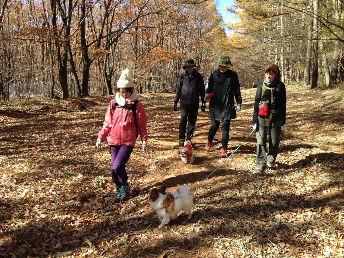 愛犬と歩く晩秋の森・棒道コース