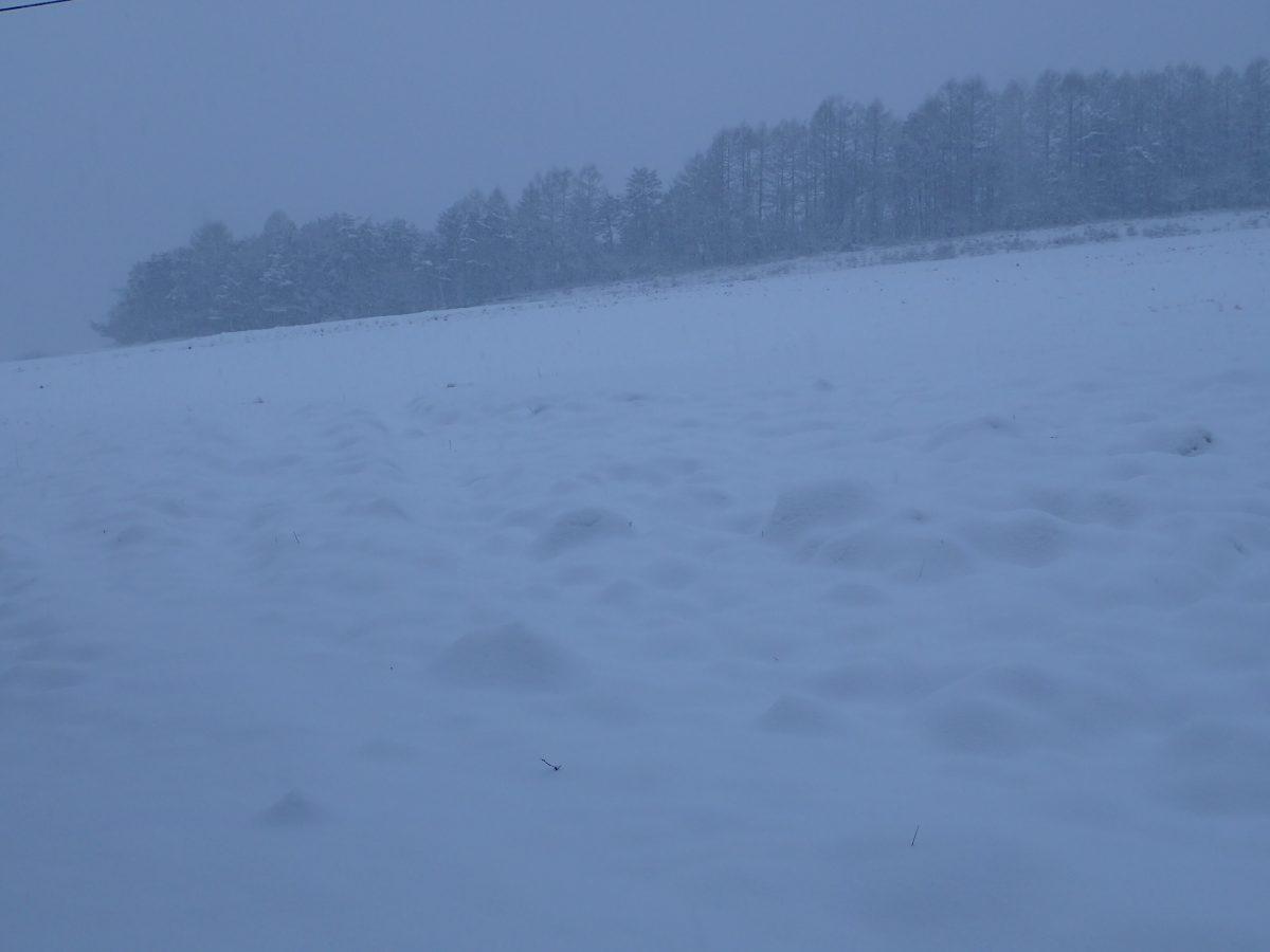待望の雪です!