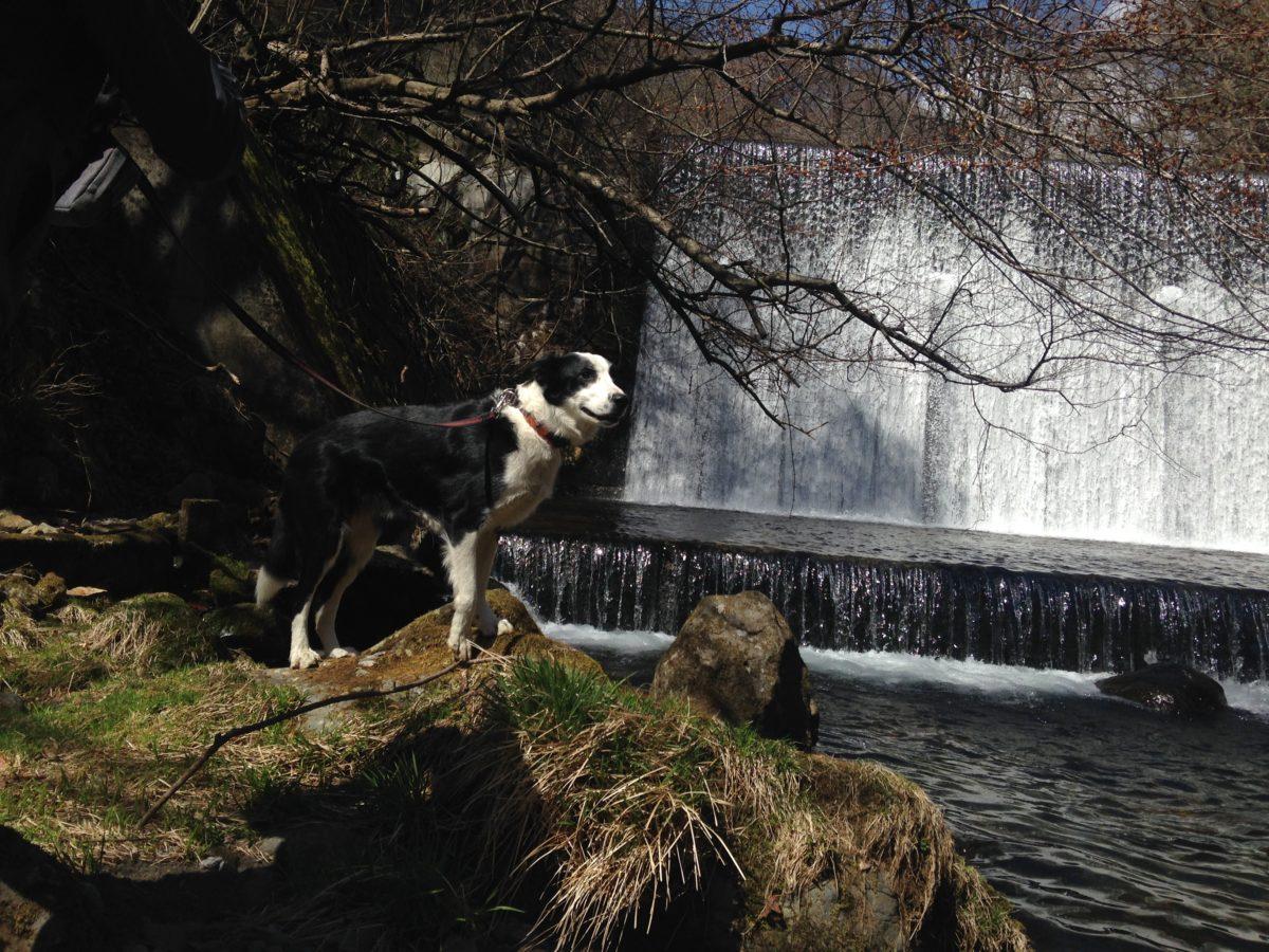 早春の大門川へ、愛犬と一緒にハイキング!