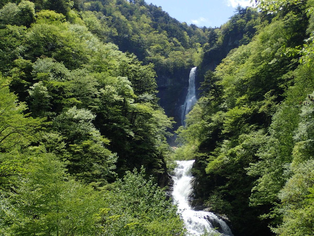新緑が最高です/精進ヶ滝トレッキング