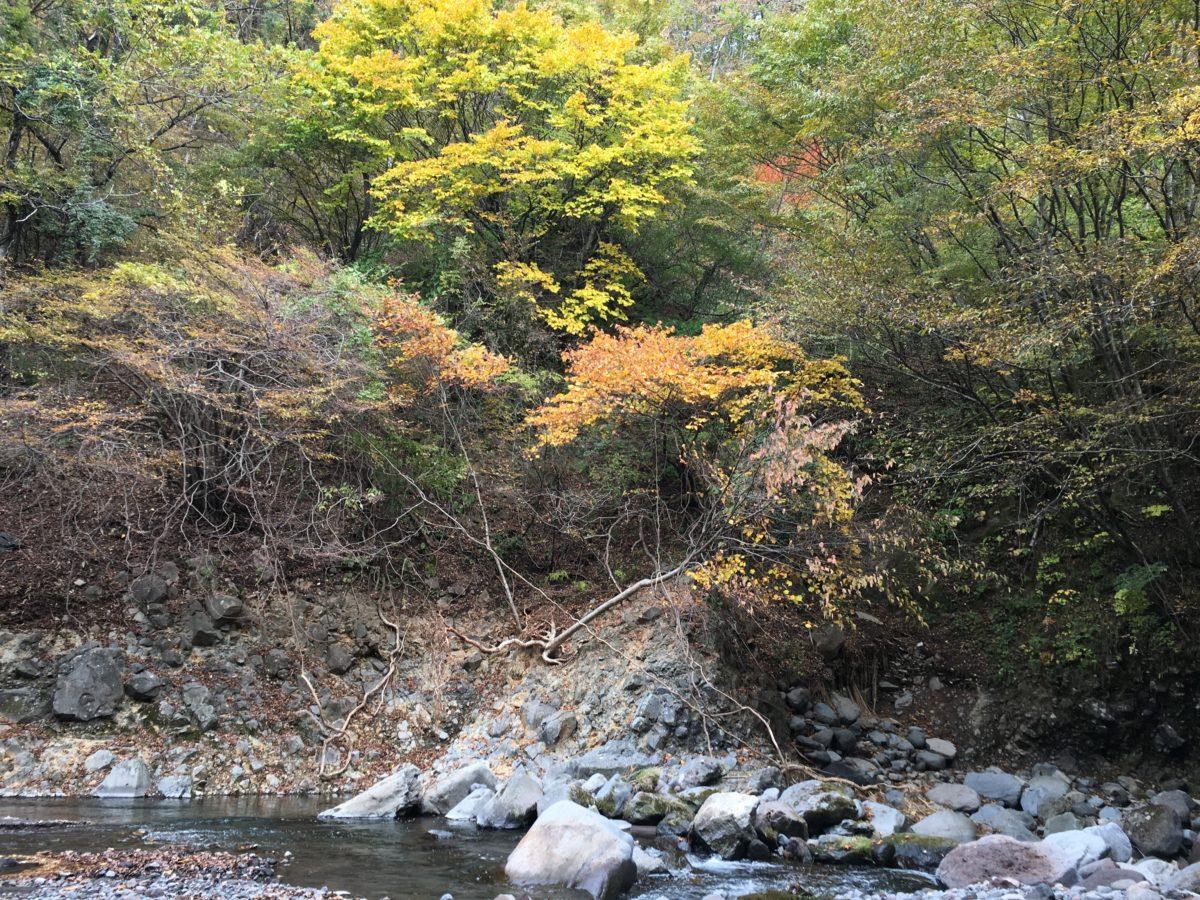 清里・萌木の村周辺の紅葉情報