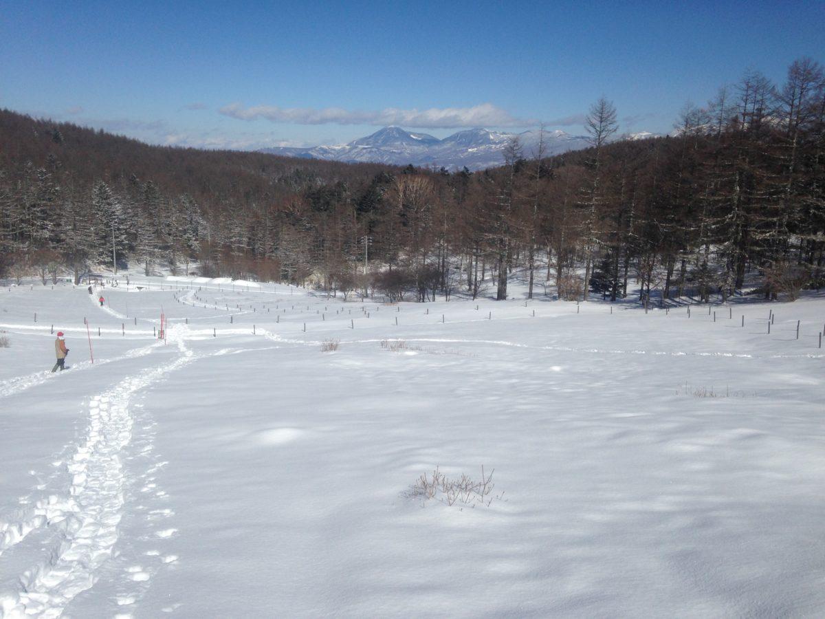 入笠山積雪情報!